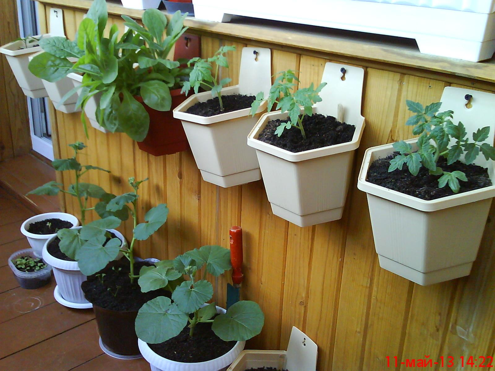 Ягоды на балконе: какие посадить, выращивание obustroeno.com.
